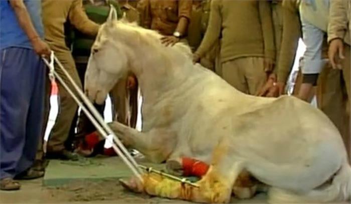 शक्तिमान प्रकरण का मुकदमा वापस लेने पर राजनीति तेज, पशु संरक्षक संस्था भी उठा रहे सवाल