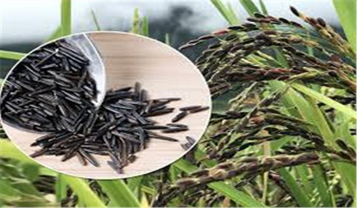 उत्तराखंड - हल्द्वानी के प्रगतिशील किसान नरेंद्र मेहरा ने उगाया