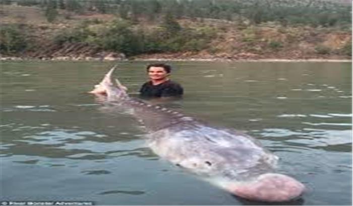 समुद्र में मिली सूअर जैसी दिखने वाली मछली
