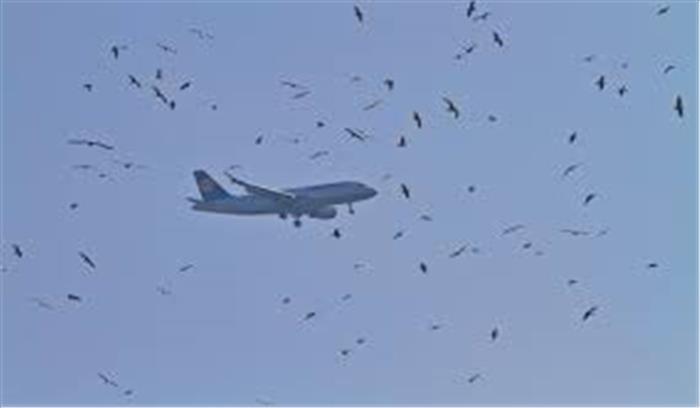 पक्षियों के टकराने से अब नहीं होंगे विमान हादसे, वैज्ञानिकों निकाला तोड़