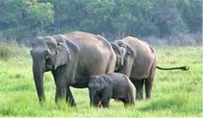 पानी मे गिरे हाथी के बच्चे को कैसे बचाया उसके माता-पिता ने,देखें पूरा वीडियो....