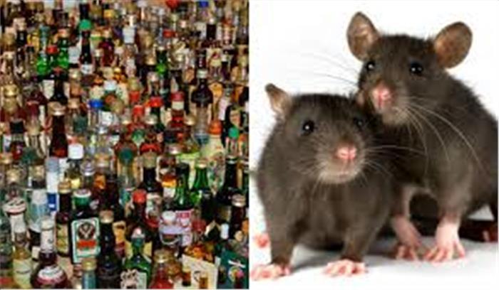 बिहार के गोदाम में चूहों ने एक बार फिर छलकाए 'जाम', पी गए सैंकड़ों लीटर शराब