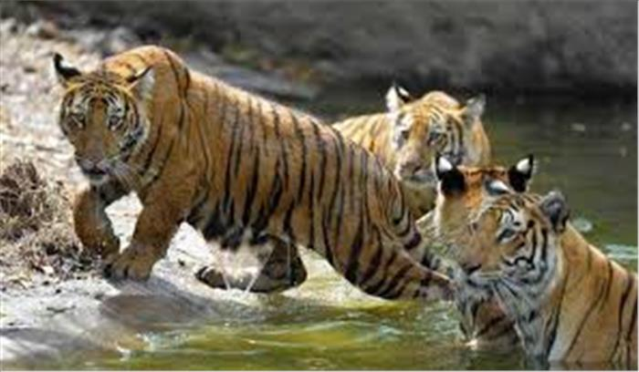 अब मोबाइल एप बताएगा राज्य में बाघों की संख्या, फरवरी से शुरू होगी गिनती