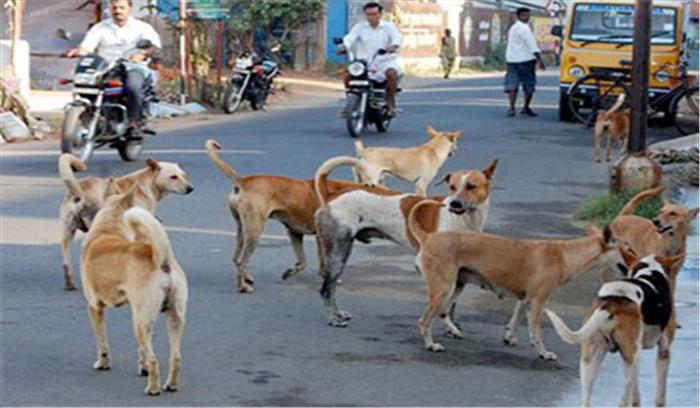 बक्सर की सड़कों पर शराब के नशे में घुत्त हैं कुत्ते, जानिए क्या है इसका रोचक कारण