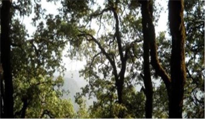 वन विभाग की लापरवाही का खामियाजा भुगत रहे ग्रामीण, जंगलों की हरियाली कागजों तक सिमटी