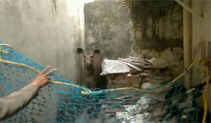 हरिद्वार के रिहायशी इलाके में घुस आया सांभर , लोगों में मची अफरा-तफरी के बाद वन विभाग के कर्मचारियों ने पकड़ा
