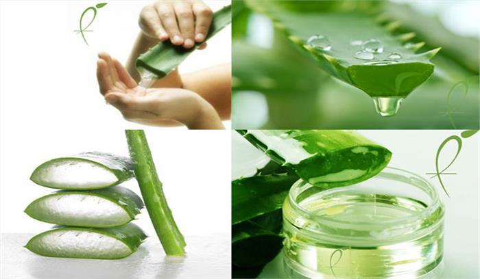 जानिए औषधीय गुणों से भरपूर एलोवेरा जैल कितना है आपकी त्वचा के लिए फायदेमंद...