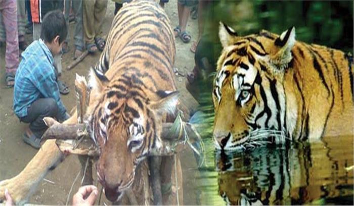 बाघों की हत्या पर हाईकोर्ट सख्त, केन्द्र और राज्य सरकार से 6 सप्ताह के अंदर मांगा जवाब