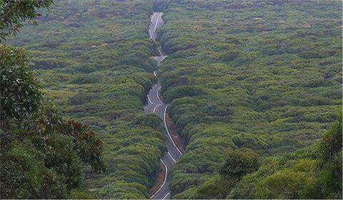 कुमाऊं और गढ़वाल मंडल को जोड़ने वाला कंडी मार्ग एक बार फिर खुलेगा, वन विभाग से अनुमति की जरूरत नहीं
