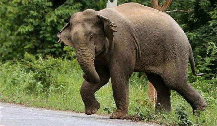ऋषिकेश में दिल्ली के श्रद्धालुओं पर हाथी का हमला , एक की मौत, भगदड़ में कुछ घायल