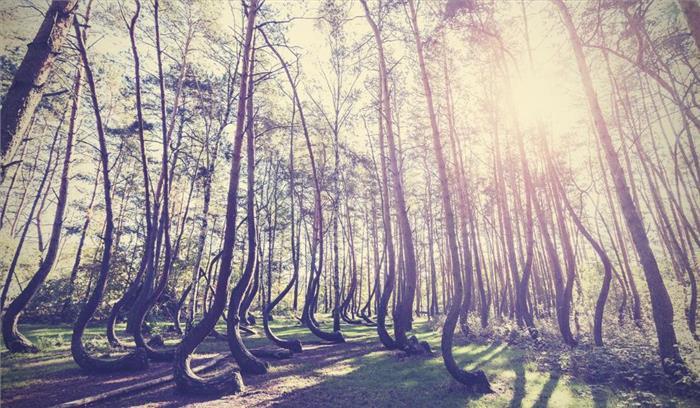 यह है दुनिया का अजीब-गरीब जंगल, यह पाए जाएं जाते हैं अनोखे तरह के पेड़