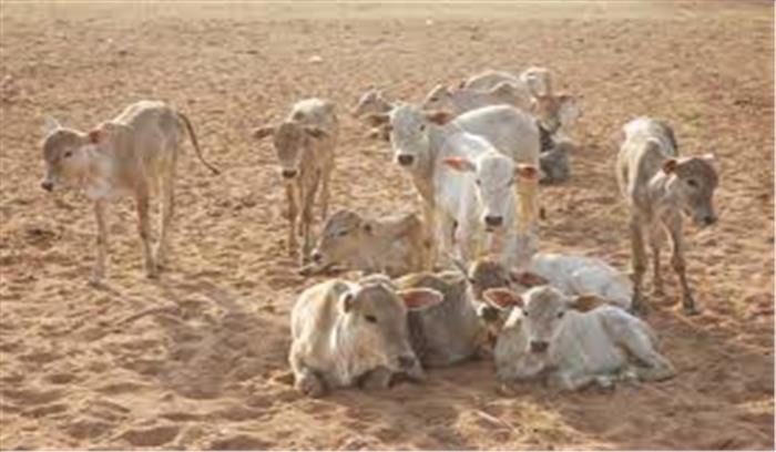 राजस्थान सरकार ने अपनाया अनोखा गोरक्षा उपाय, गाय गोद लेने वाले गणतंत्र और स्वतंत्रता दिवस पर होंगे सम्मानित