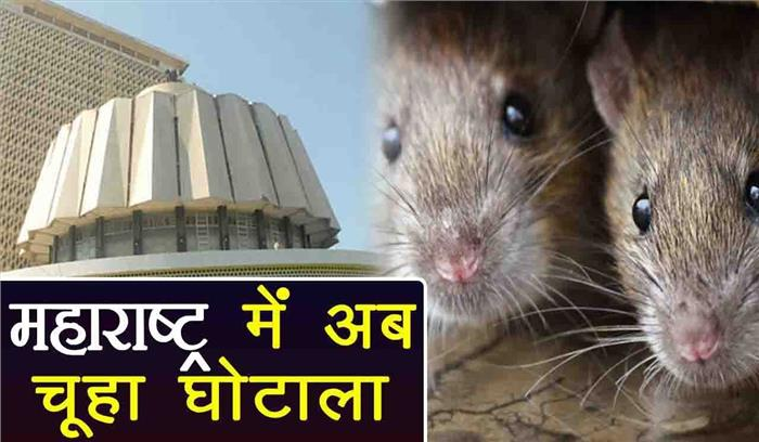 महाराष्ट्र सरकार में हुआ अनोखा घोटाला, कंपनी ने महज हफ्ते भर में 3 लाख से ज्यादा चूहों को मार दिया
