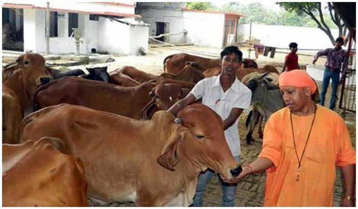 अगली नवरात्रि से उत्तर प्रदेश के मंदिरों में मिलेंगी गाय के दूध से बनी मिठाइयां, सरकार बना रही है योजना
