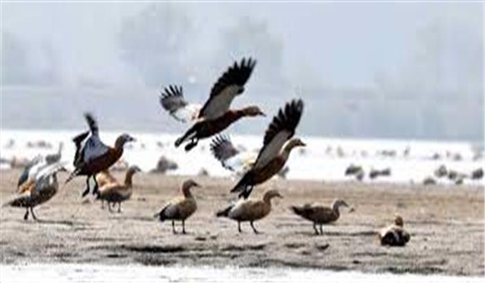 प्रवासी पक्षियों का आसन वेटलैंड से हो रहा मोहभंग, मानवीय दखल के चलते घट रही तादाद