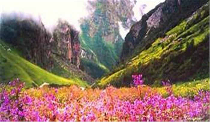 फूलों की घाटी में इस बार फिर आई बहार, पिछले सालों की तुलना में बढ़ी पर्यटकों की संख्या, 31 अक्तूबर को होगी बंद