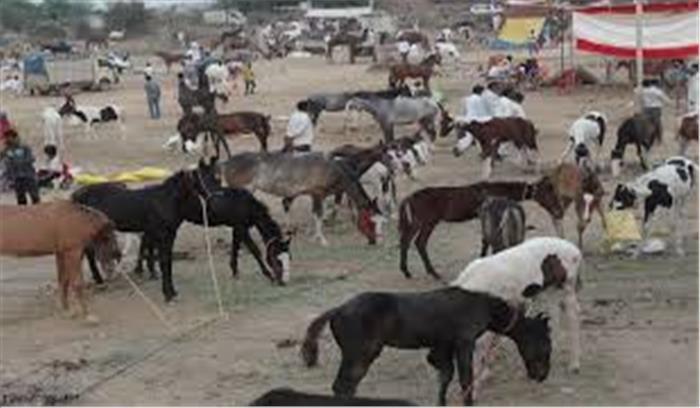 उत्तरप्रदेश के इस शहर में लगता है गधों का मेला, करोड़ों का होता है कारोबार