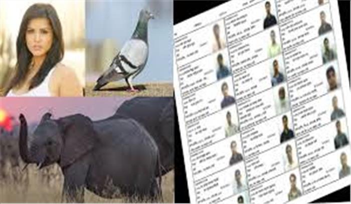 यूपी में मतदाता सूची में बड़ी गड़बड़ी आई सामने, सन्नी लियोनी के साथ हाथी हिरण और कबूतर भी बने मतदाता