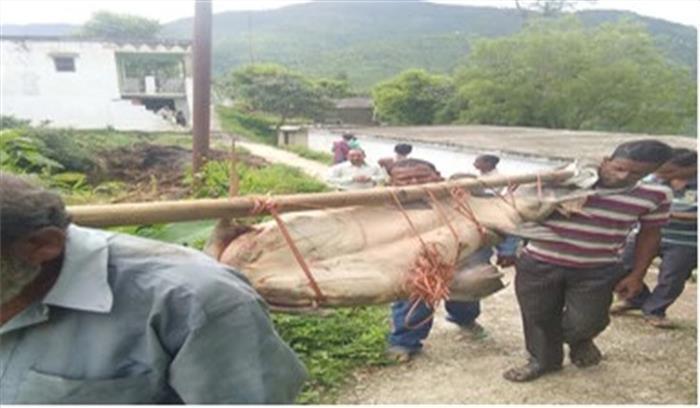 रामगंगा नदी में समुद्र की विशालकाय मछली को देखकर दंग रह गए लोग