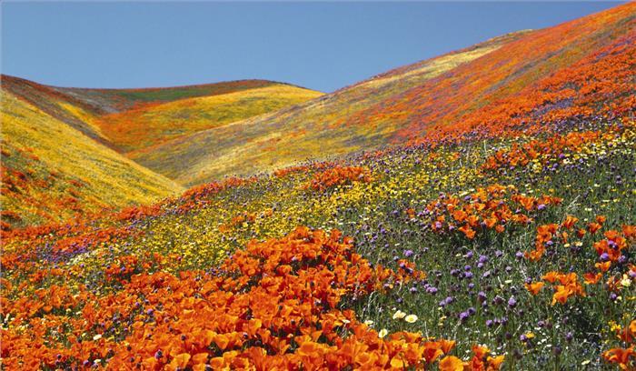 रिकाॅर्डतोड़ संख्या में पर्यटक पहुंचे फूलों की घाटी का दीदार करने, सरकार को हुई लाखों रुपये की आमदनी