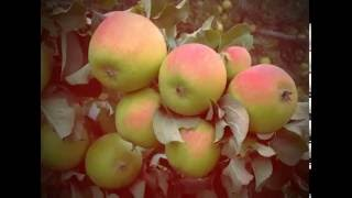 देवभूमि में पाए जाने वाले फल
