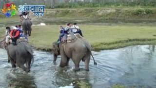वाइल्ड लाइफ करेंगे हाथी की सफारी